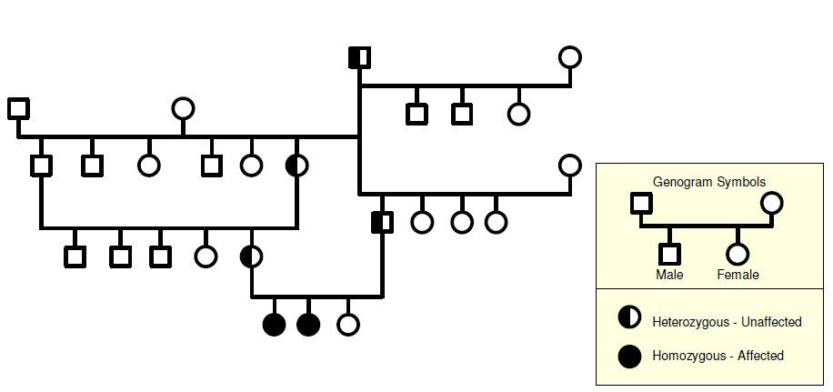 Genogram Software